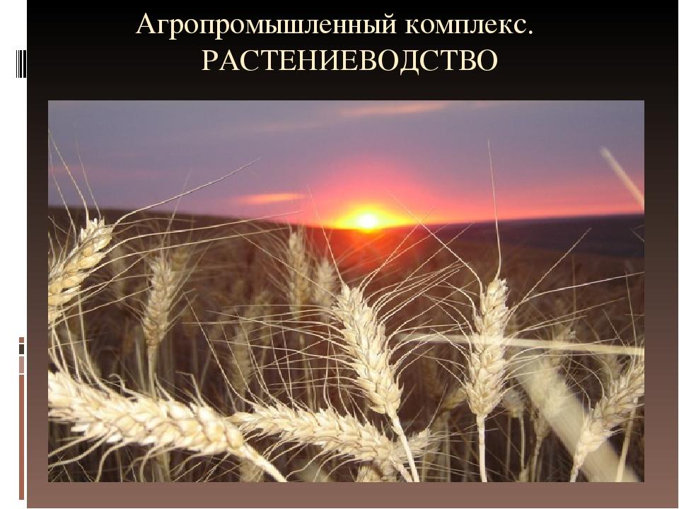 Агропромышленный комплекс. РАСТЕНИЕВОДСТВО
