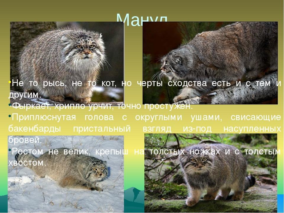 рос картинки животных красной книги красноярского края будет показывать
