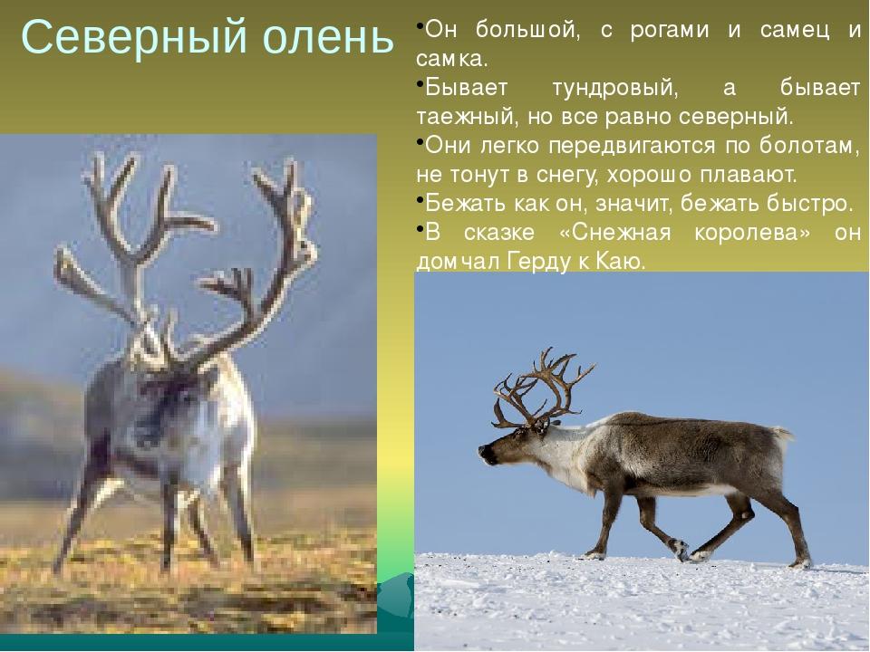 картинки животных красной книги красноярского края вот если педаль