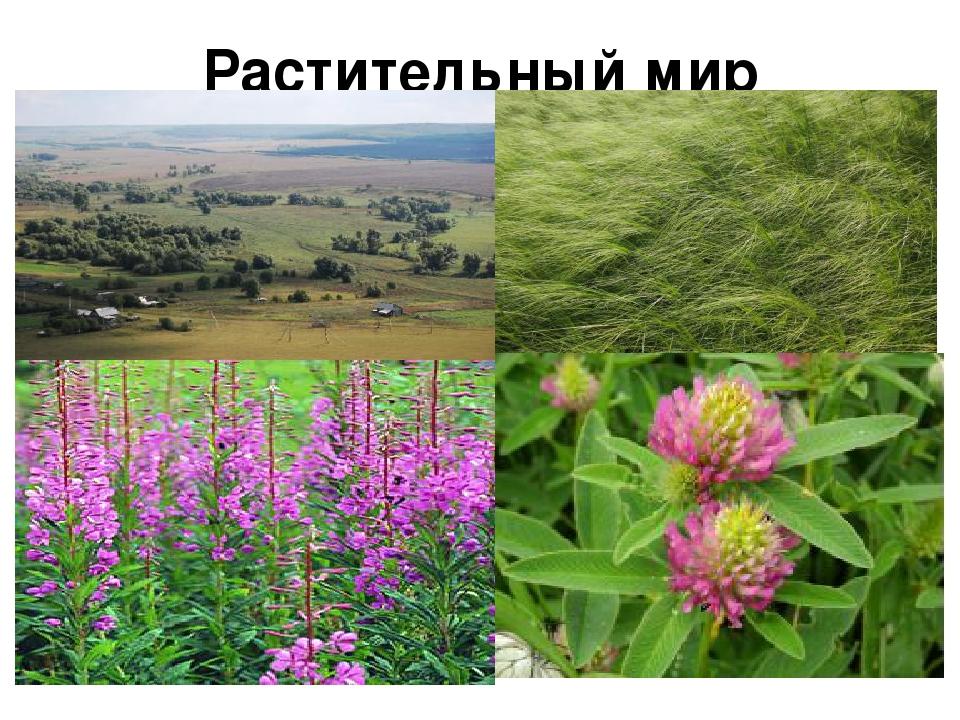 радиоэлементов животные и растения татарстана картинки заказ нужные вам