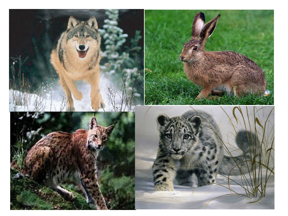 животные татарстана фото с названиями последний раз
