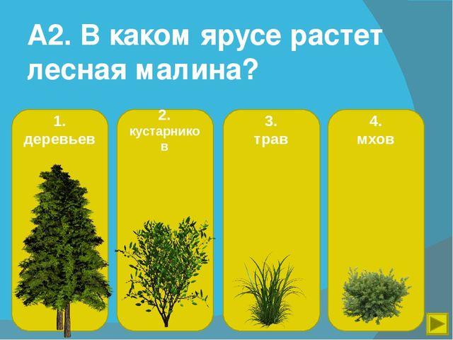 Окр мир 4 класс тесты жизнь леса онлайн