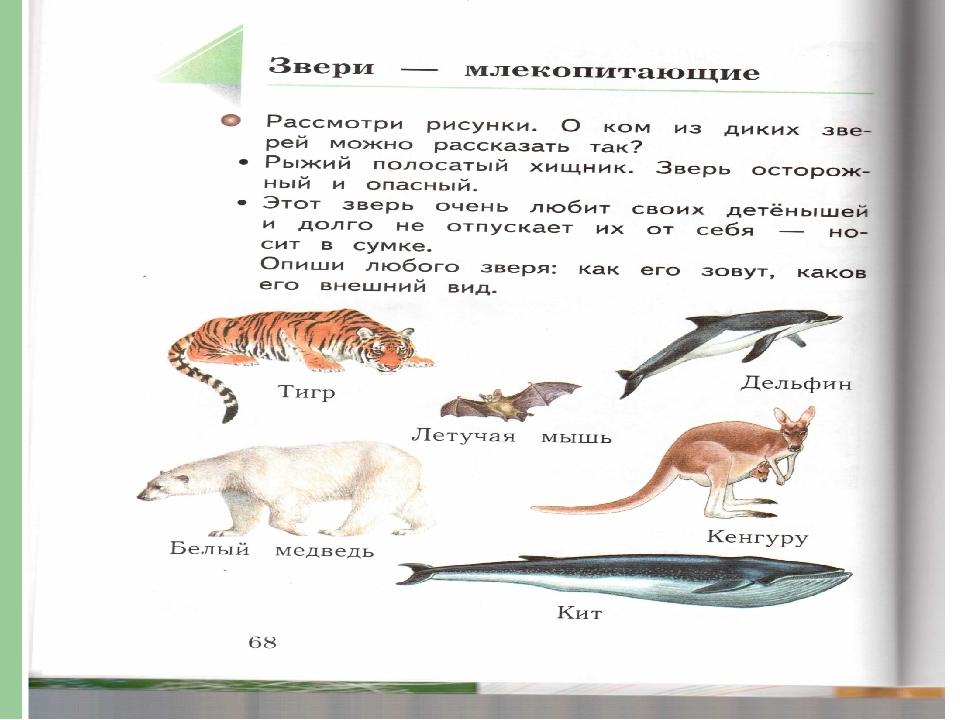 Задание звери млекопитающие