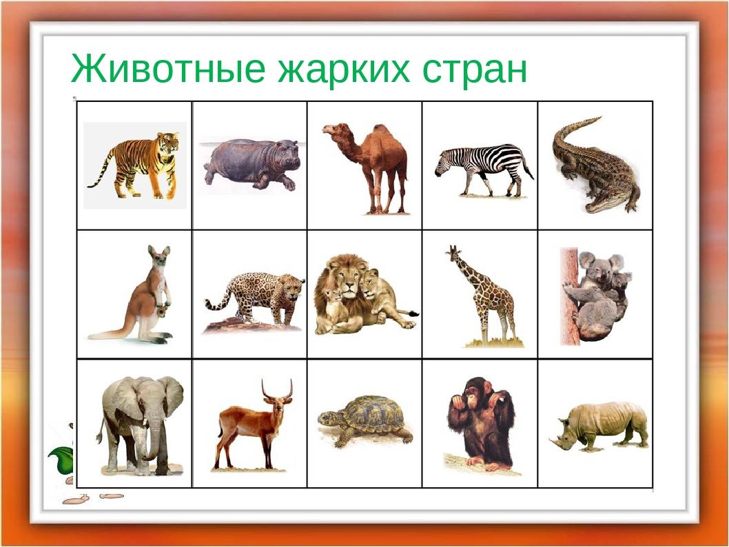 основе картинки животных жарких странах письменность