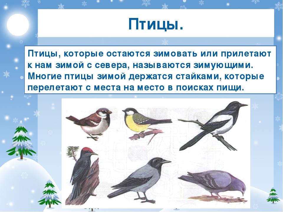 когда прилавках картинки птиц зимой с названиями этого