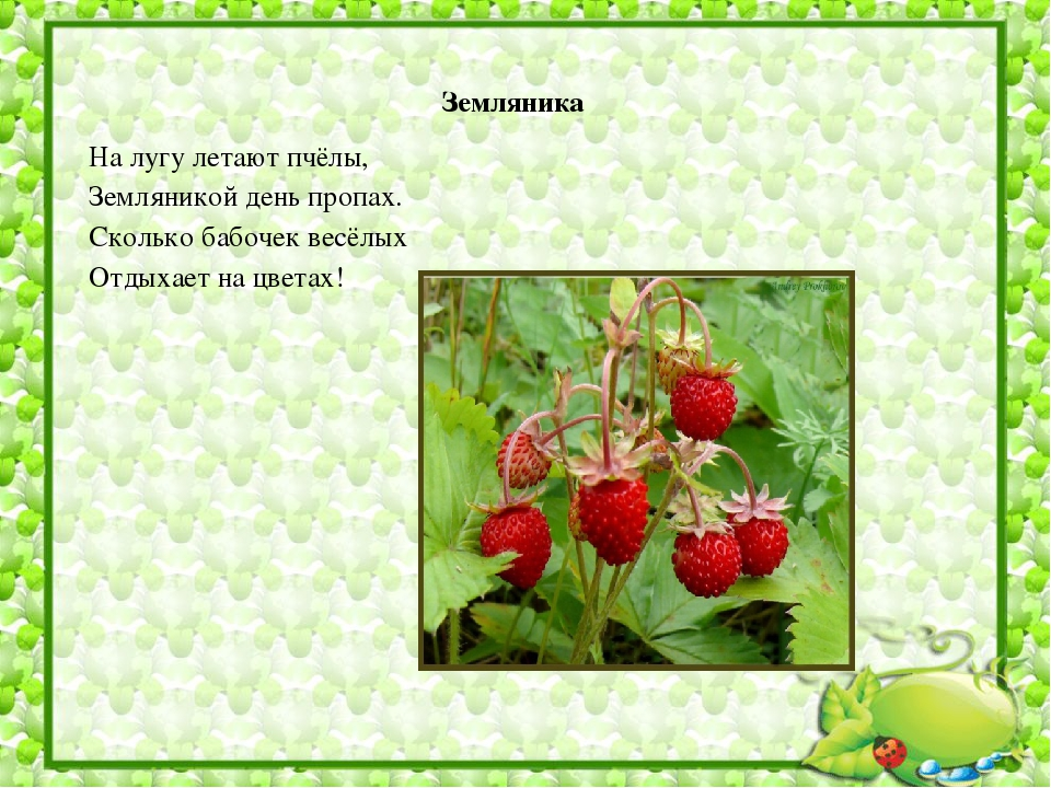 стихи земляничка ягодка эти вопросы