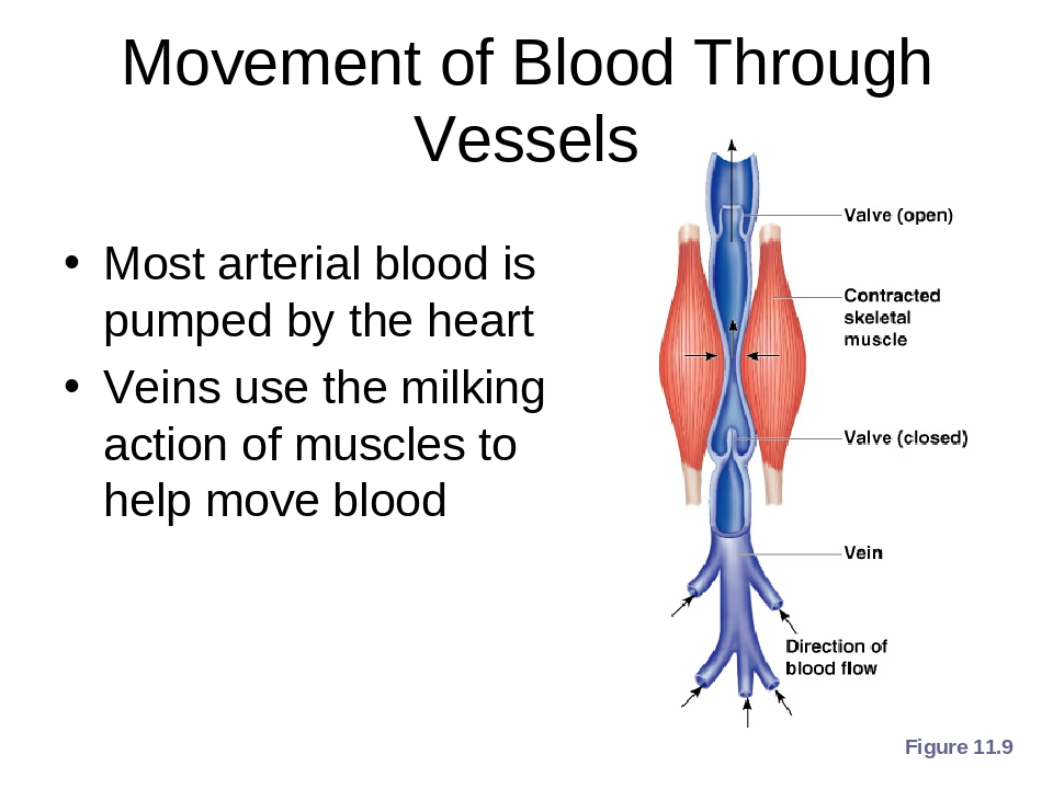 the movement of blood through the