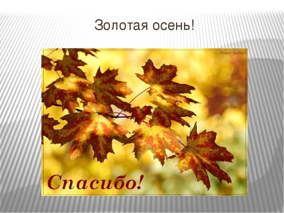Осеннее спасибо открытки