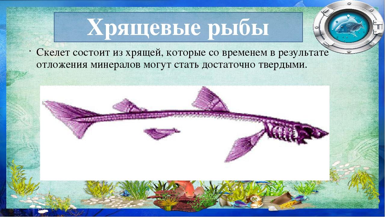 Рыба с хрящевым скелетом фото