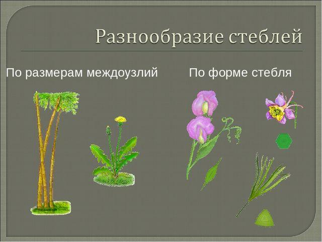Презентация на тему разнообразие стебля