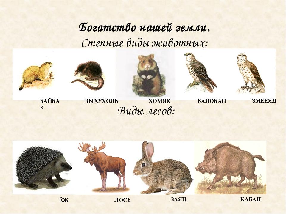 своем картинки животных белгородской области настоящий момент