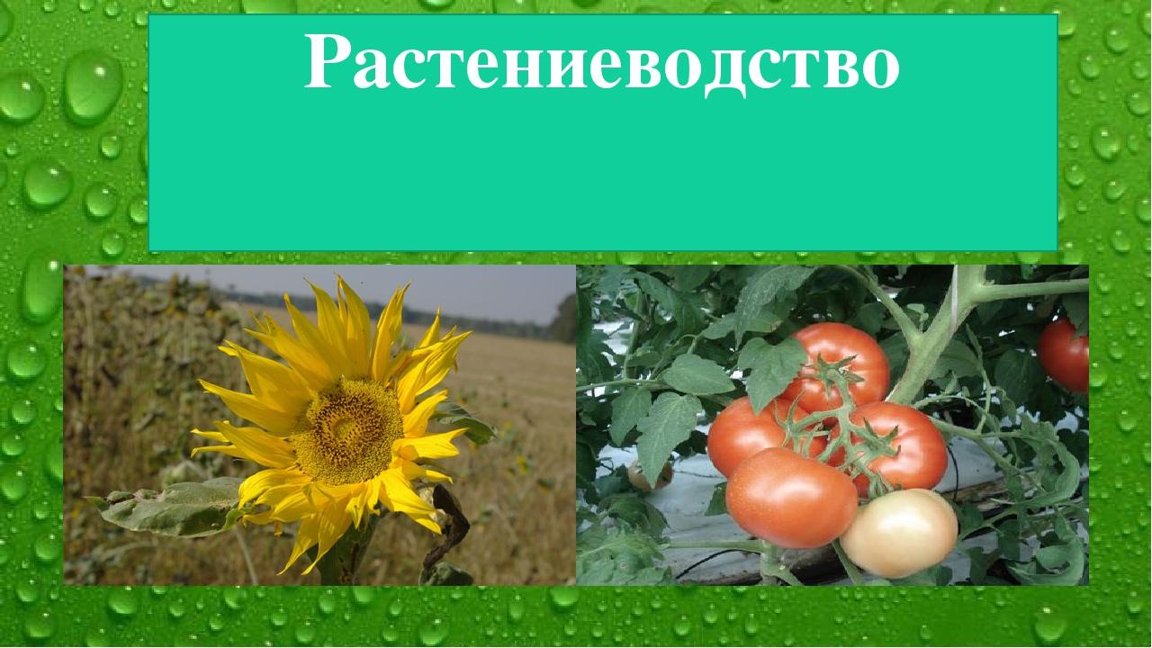 Растениеводство