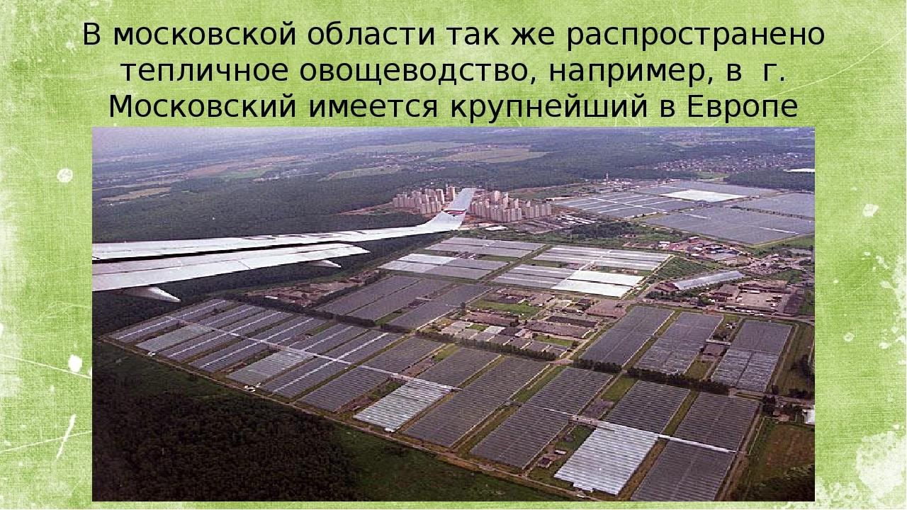 В московской области так же распространено тепличное овощеводство, например,...