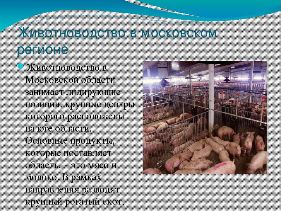 Животноводство в ярославской области доклад 9603