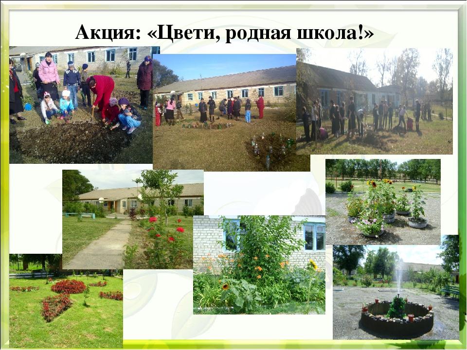 Акция: «Цвети, родная школа!»