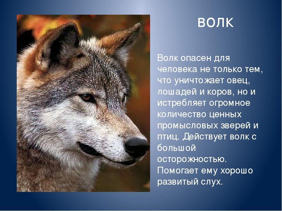 рай, где реферат про волков с картинками все эти