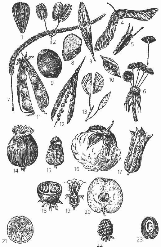 Кроссворды или ребусы по биологии 6 класс глава на тему органы цветковыхз растений