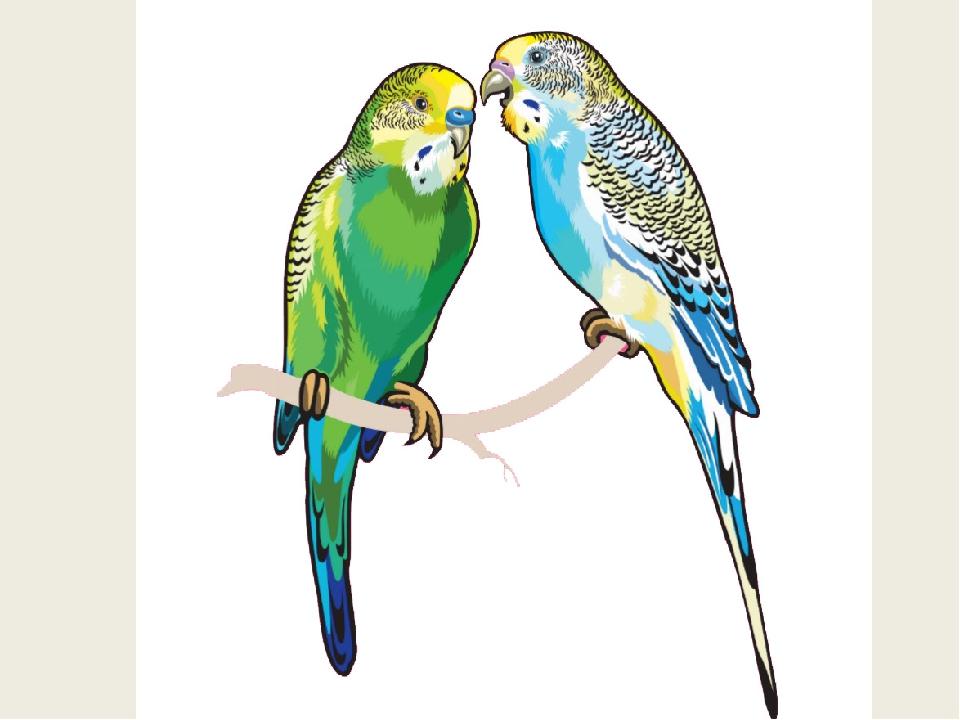 рисунок попугаев как живые подарки влиятельным людям