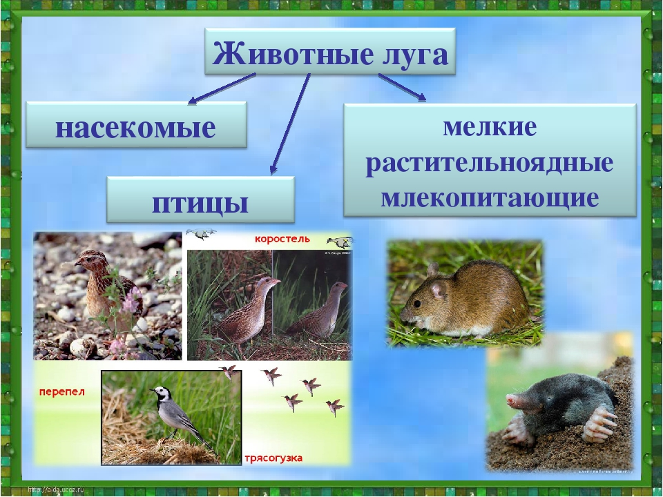 Картинки растения и животные луга