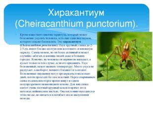 Кроме известного многим тарантула, который может болезненно укусить человека,