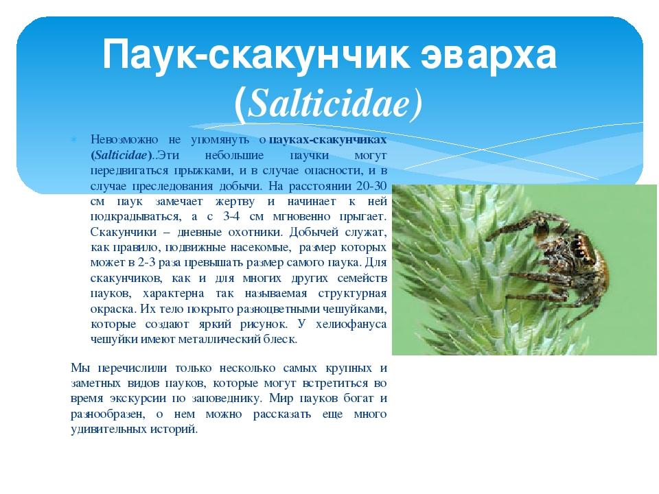 Невозможно не упомянуть опауках-скакунчиках (Salticidae)..Эти небольшие пауч...