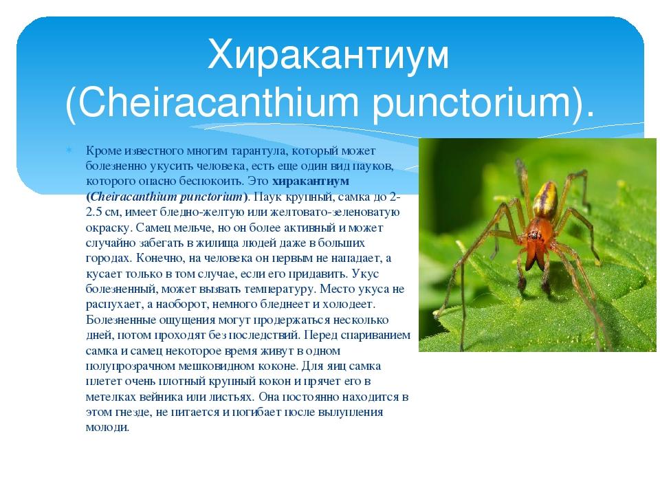 Кроме известного многим тарантула, который может болезненно укусить человека,...