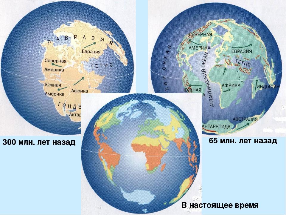 300 млн. лет назад 65 млн. лет назад В настоящее время