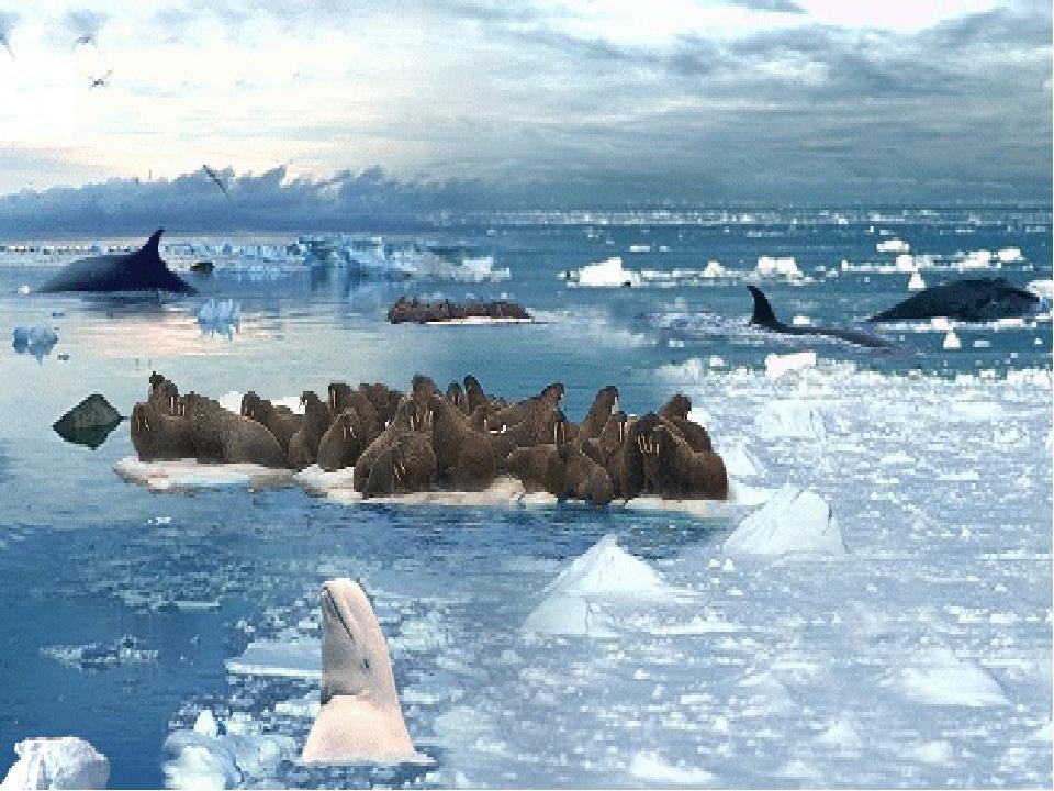Картинка природная зона арктика для детей