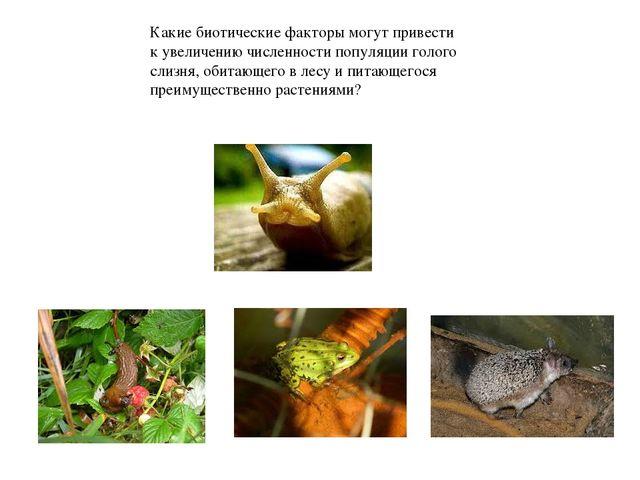 Почему сов в экосистеме леса относят