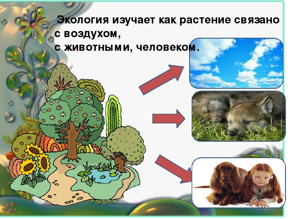 Экология изучает как растение связано с воздухом, с животными, человеком.