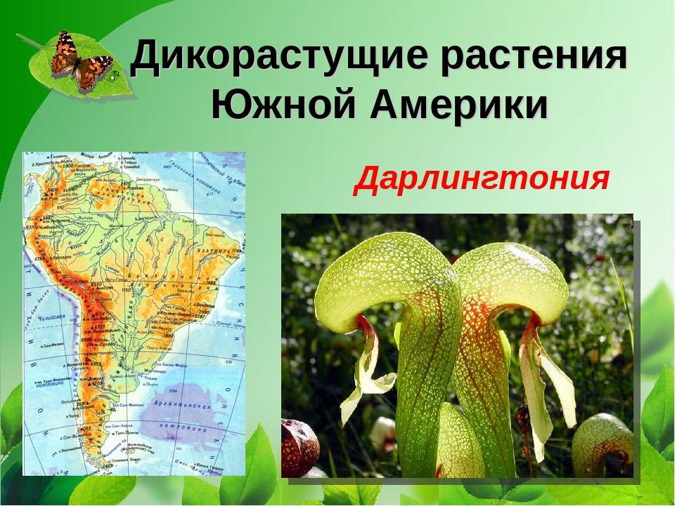 Растения южной америки фото с названиями и описанием для детей