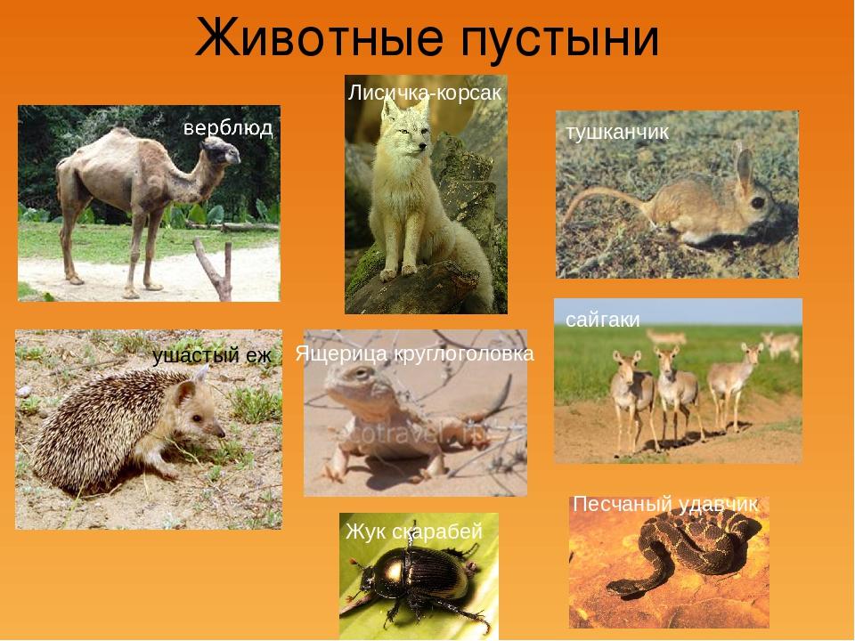 животные пустынь россии картинка и описание