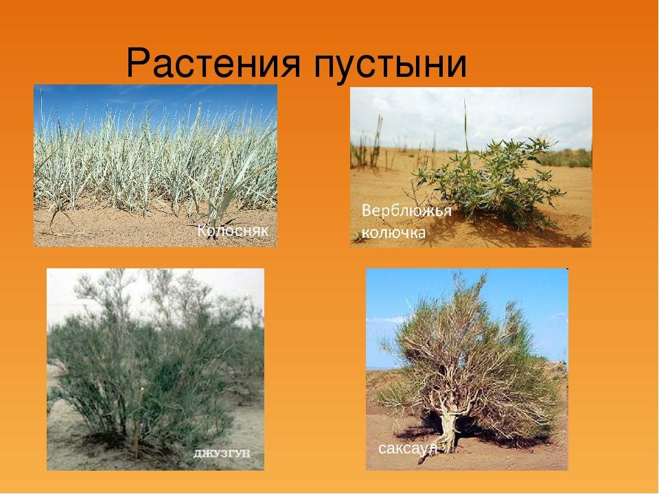 видео говорит растения пустыни фото с названиями этих