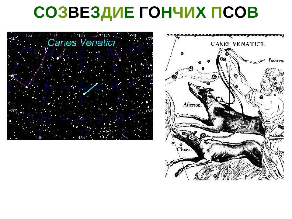 цитата созвездия гончие картинки кудри делают