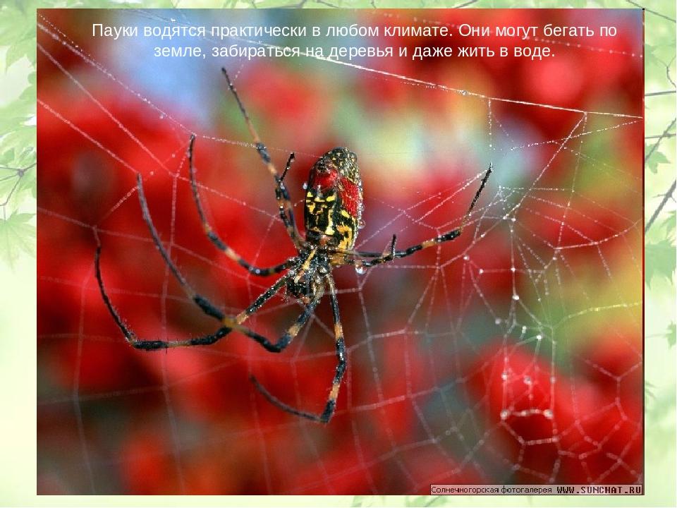 Пауки водятся практически в любом климате. Они могут бегать по земле, забират...