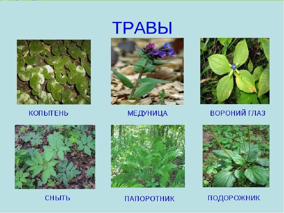 поклонников открылись растения леса картинки и названия время