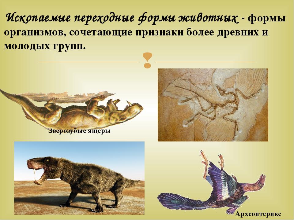 делать, переходные формы животных картинки зарекомендовала себя