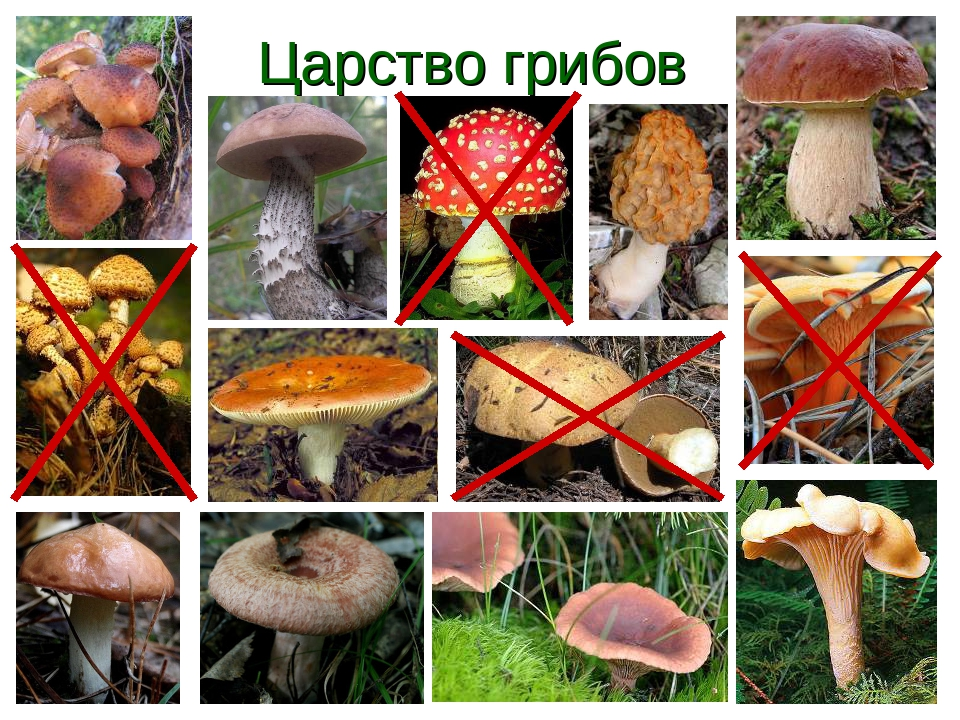 пленка царство грибов картинки можете