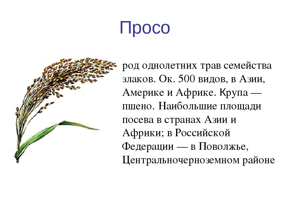 Однолетние травы курсовая работа 6980