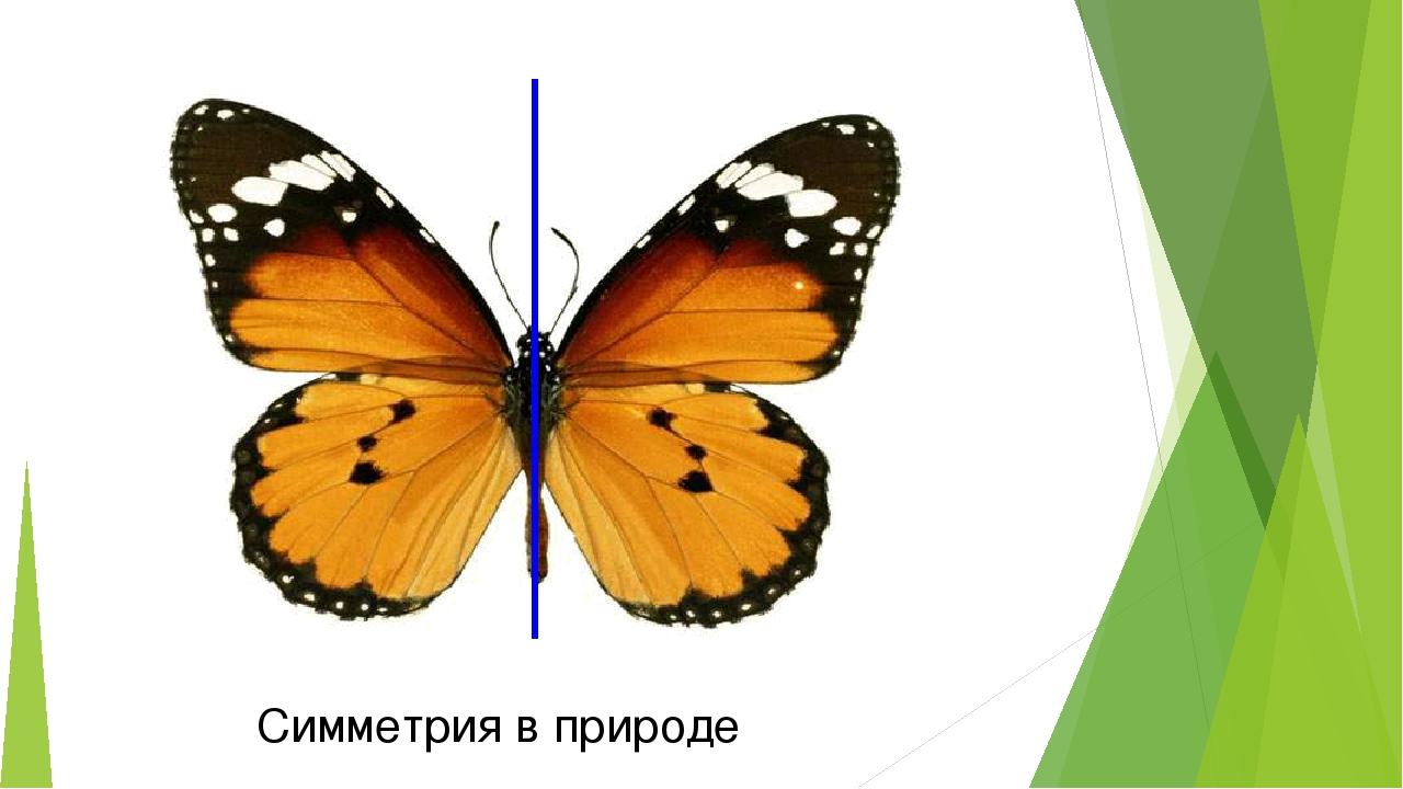 осевая симметрия в природе картинки примеры автомобилисты