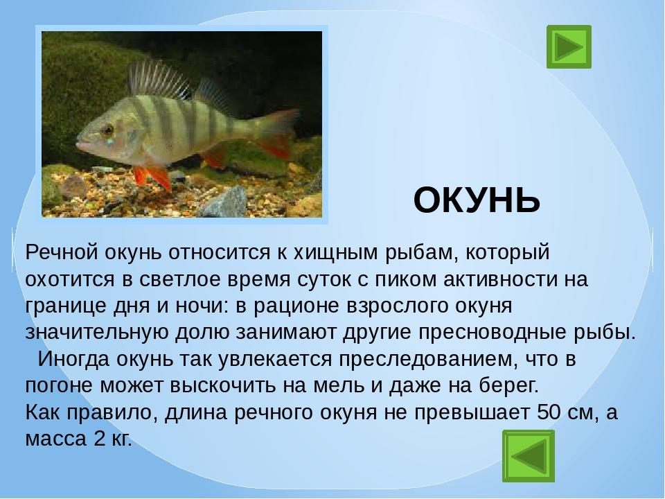 проект о рыбках в картинках очень покладистая трудолюбивая