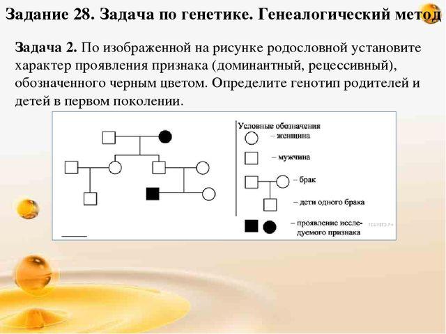 генеалогический метод разбор заданий ши-тцу Порода: ши-тцу