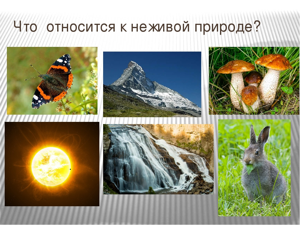Явление живой природы картинки для
