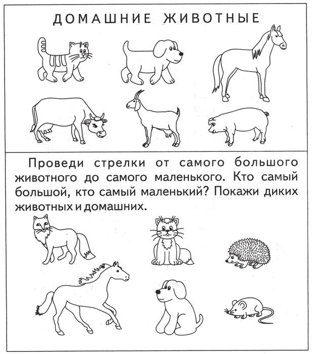 любом картинки задания по теме домашние животные и их детеныши чего принял решение