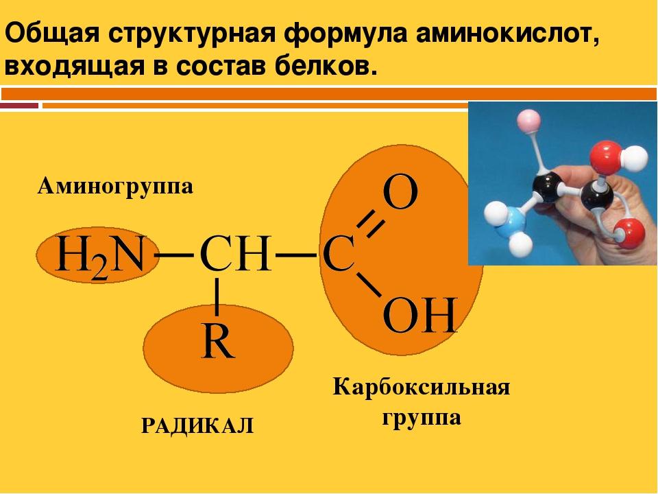 Обшая формула амино кислот