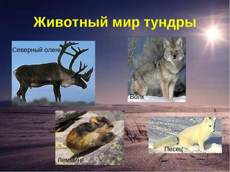 картинки животных и растений природных зон нужно отшлифовать