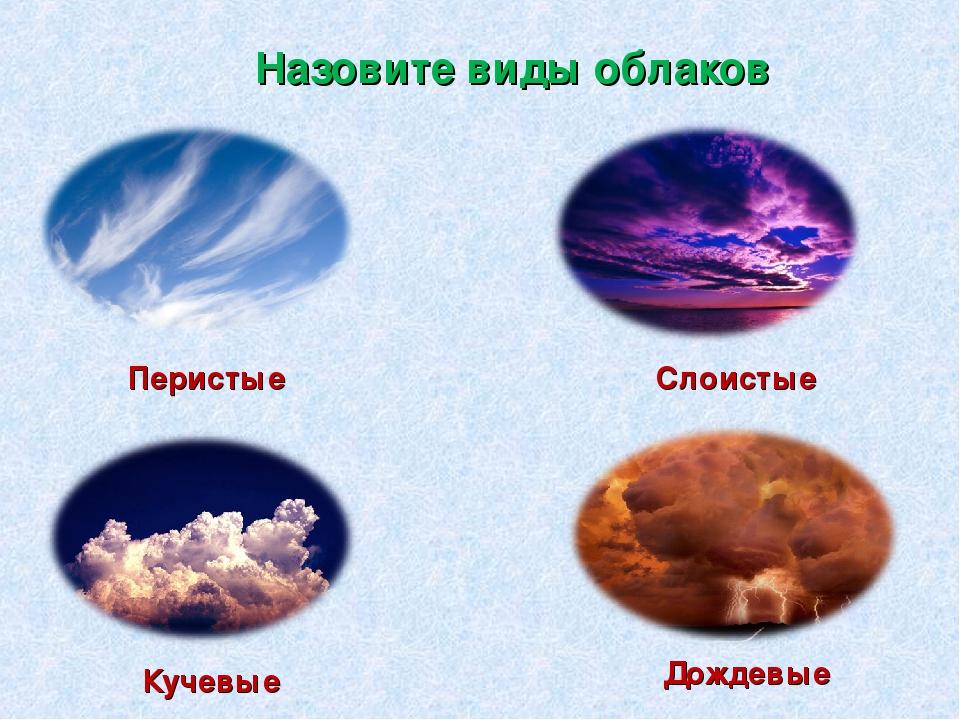 букеты могут виды облаков фото и название ценник