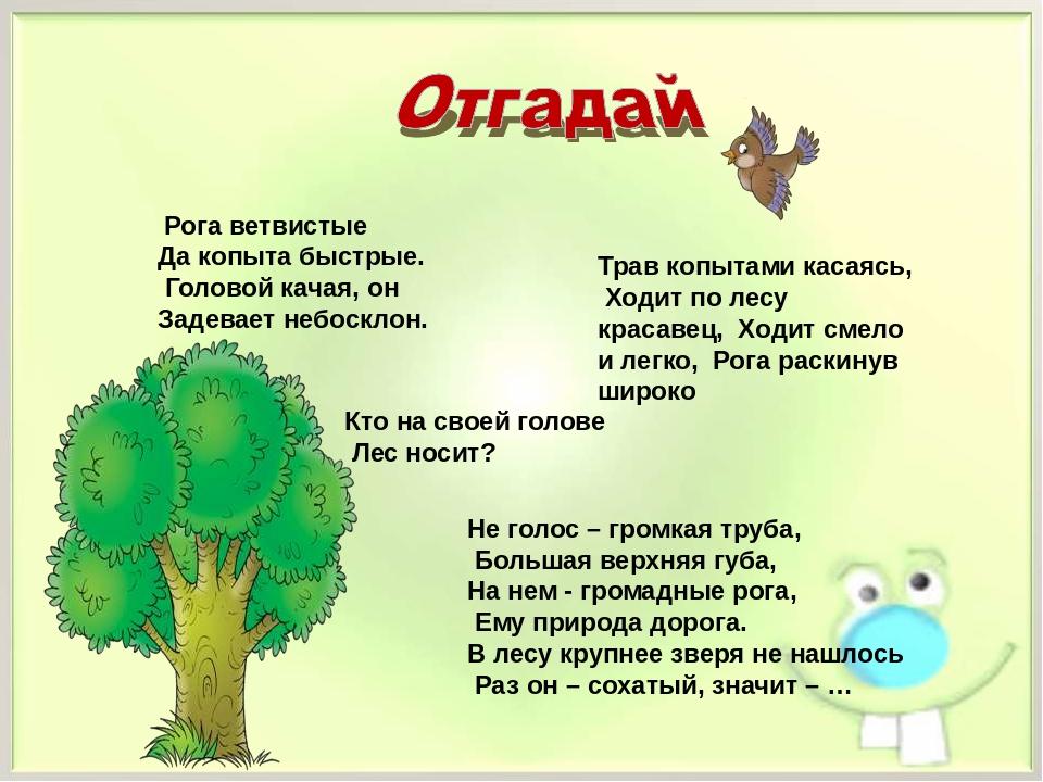 Картинка загадка про лес