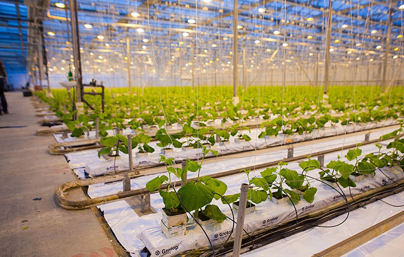 Теплицы для выращивания помидоров зимой 697