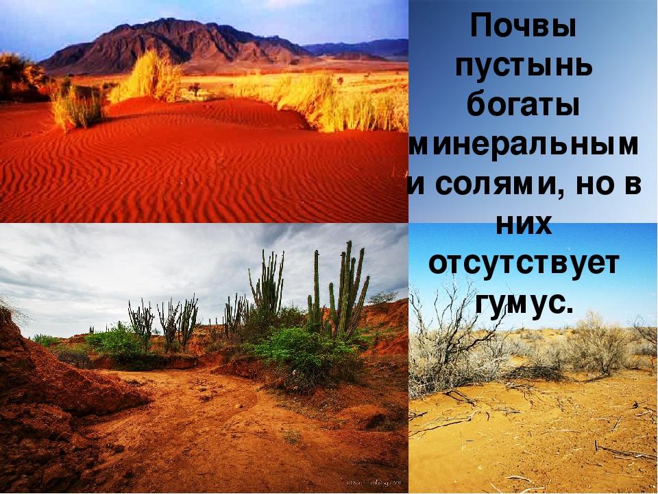какая почва в пустыни и полупустыни всегда указывает сведения